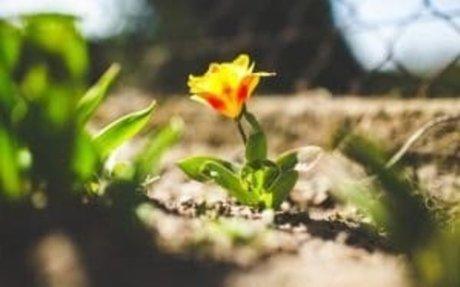 Spring Renewal: 5 Ways to Reawaken Your Spirit and Get a Fresh Start
