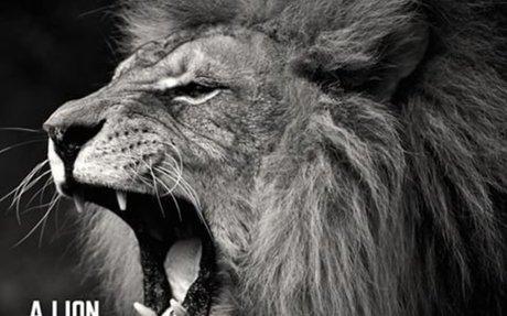 If I were an animal...