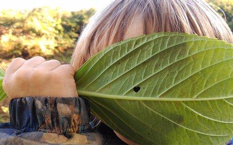 Educando el corazón a través de la naturaleza - el blog d'educació d'UManresa