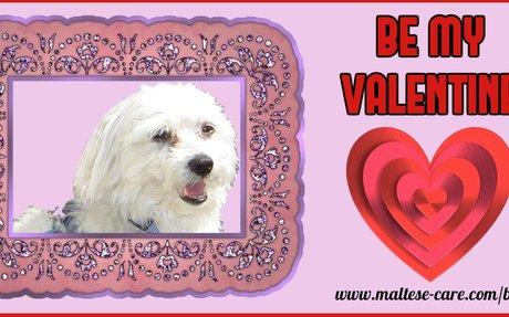 Be My Valentine Maltese T-Shirt