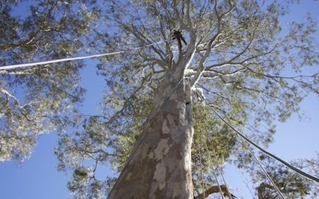 Everything in the world about Tree Climbing.