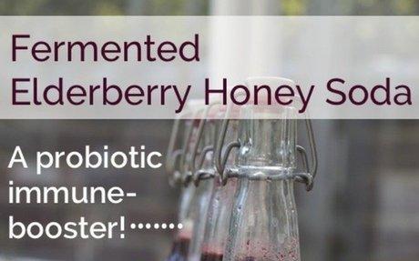 Fermented Elderberry and Honey Soda