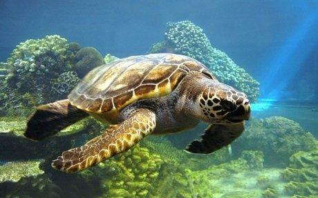 """Já está em vigor a lei que penaliza os """"inimigos"""" das tartarugas marinhas"""