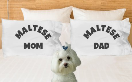 Maltese Mom And Dad Pillow Cases