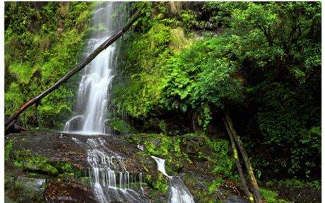 Parks Victoria - Great Otway National Park