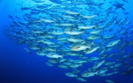 Climate change drives collapse in marine food webs