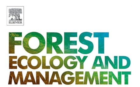 Early forest thinning changes aboveground carbon distribution, but not total amount