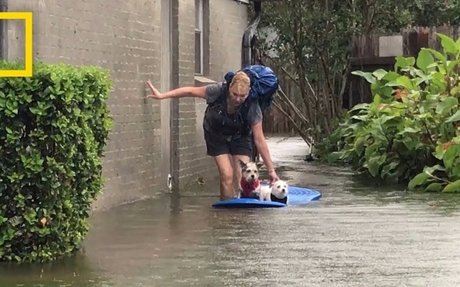 Watch Photographer Evacuate Mom and Dogs From Harvey's Devastating Flooding | National Geo