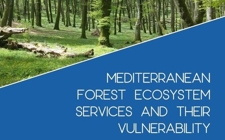 Mediterranean forests: key ecosystem services and their vulnerability