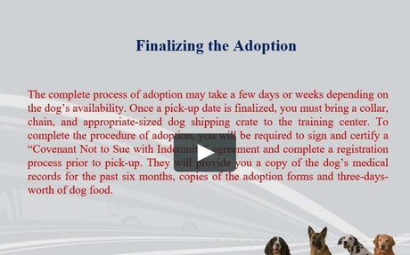 Stephanie Taunton - How to Adopt Dogs That Failed Government Training for Being Too Nice