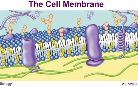 CH 07 MEMBRANE STRUCTURE & FUNCTION.pptx