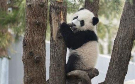 Smithosian National Zoo Webcams