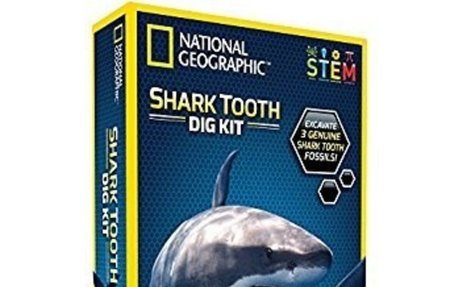 Amazon.com: NATIONAL GEOGRAPHIC Shark Tooth Dig Kit: Toys & Games