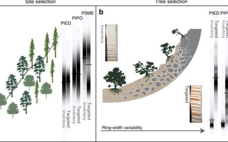 Sampling bias overestimates climate change impacts on forest growth in the United States