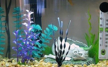 Hogyan tisztítsuk az akváriumot