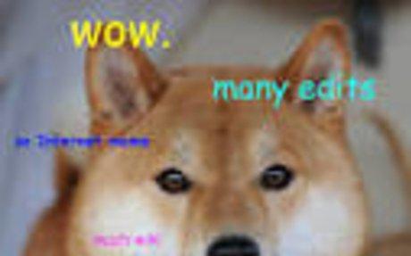 Doge - Google 검색