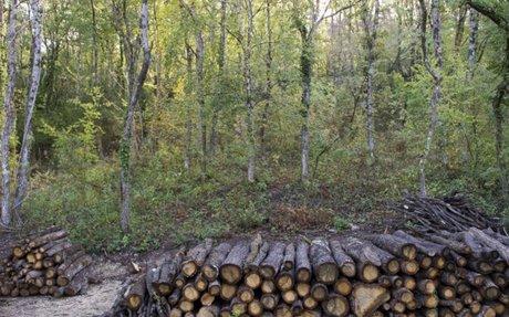 Plan national de gestion de crise tempête pour la filière forêt-bois