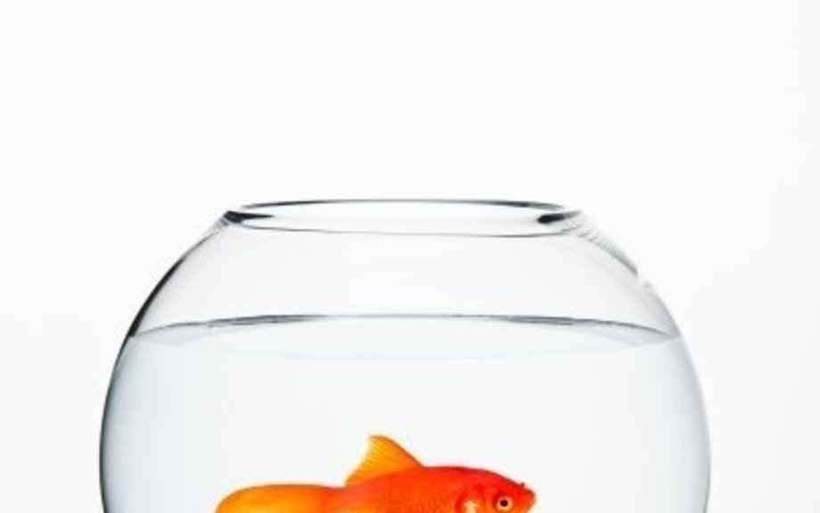 You Now Have a Shorter Attention Span Than a Goldfish