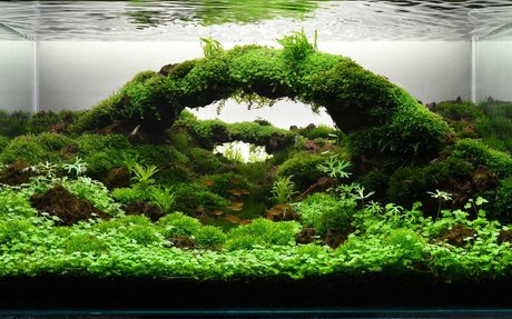 Aquascaping, a hobby and interest