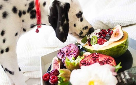 Best Food Diet Plan for Your Dog