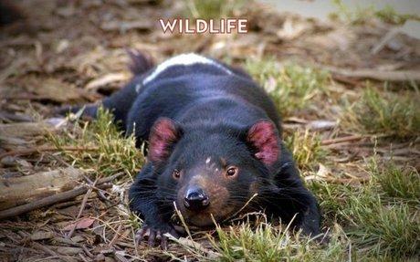 Wildlife - Surveyor Photos