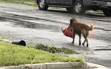 Hurricane Dogs