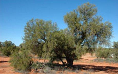 The Great Victoria Desert - Clayton Graham