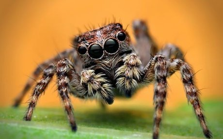 I'm terrified of spiders