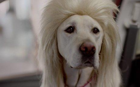 Subaru Dog Tested | Subaru Commercial | Bad Hair Day - YouTube