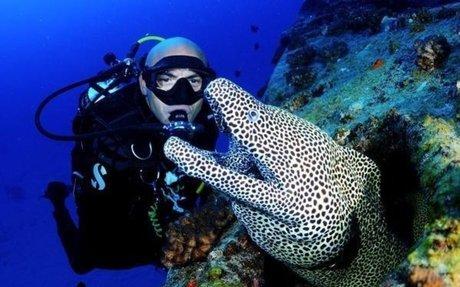 What is Marine Biology? - MarineBio.org