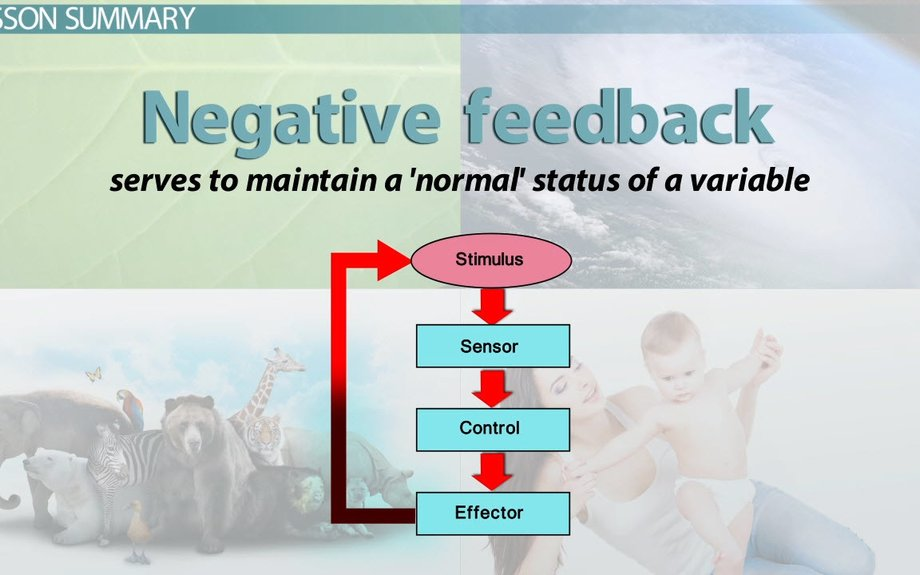 What is Negative Feedback in Biology? - Definition & Examples