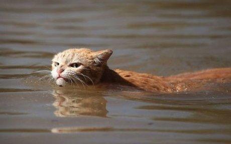 Amazing Animal Survival Stories