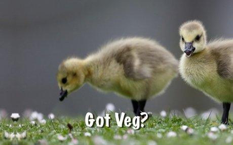 Vegan Meal Plan Recipes Perfect for New Vegans - LottaVeg