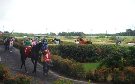 Disaster Relief: Industry Groups Join Forces to Help Puerto Rican Racehorses