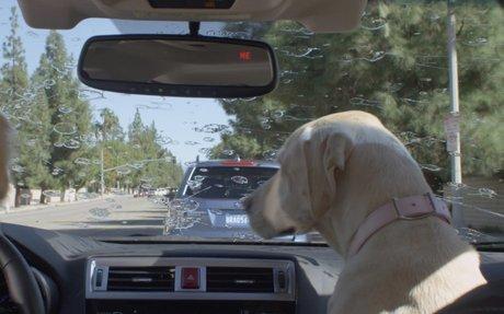 Subaru Dog Tested | Subaru Commercial | Windshield Wiper - You...