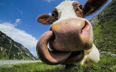 17 Farm Animals That Need to Respect Personal Boundaries - Modern Farmer