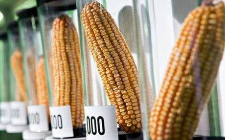 The Environmentalist Case In Favor Of GMO Food