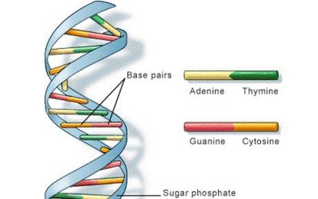 Biology for Kids: DNA and Genes