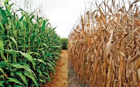 Crop Yields, Limits of Cultivation, and Soil Erosion (#3)