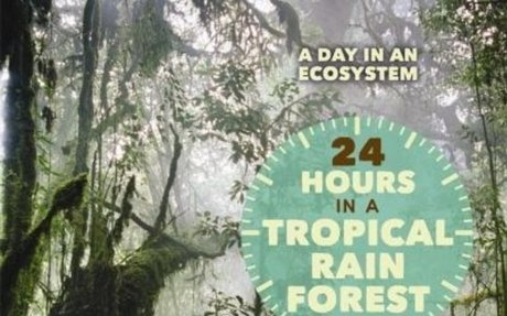 24 hours in a tropical rain forest / Virginia Schomp.