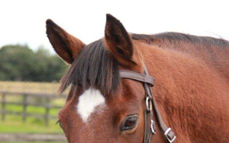 Horses for Healing Charitable Trust - Information