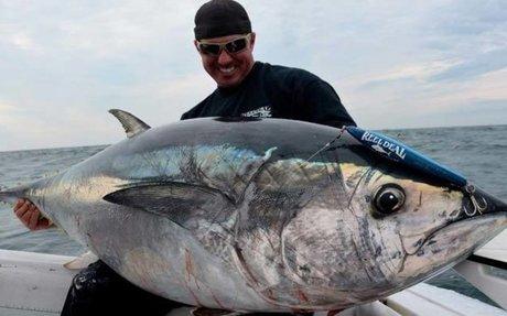 WEBSITE: Bluefin's Endangered Status