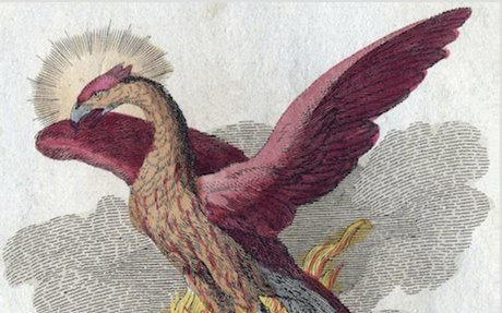 CommonLit   The Phoenix Bird