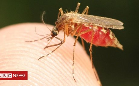 Defeat malaria in a generation - here's how