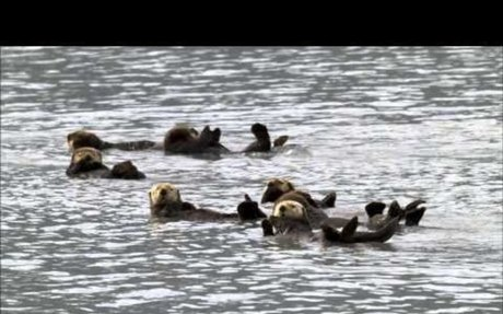 Amazing Facts About Sea Otters