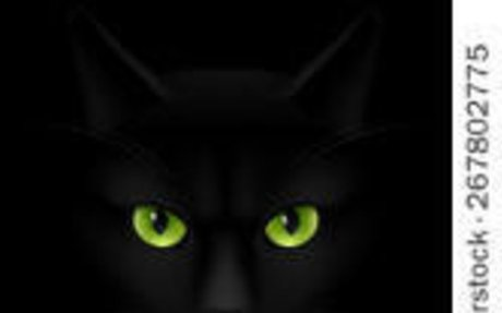Kyo (My Black Kitten)