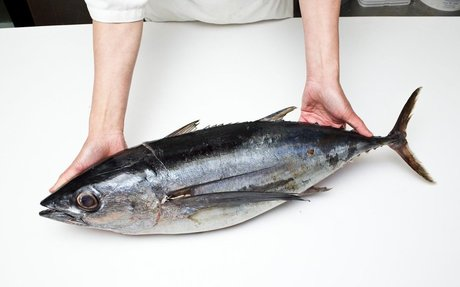 web: Tuna Lover's Dilemma: To Eat or Not to Eat?
