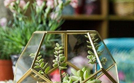 Top 10 Best Geometric Terranium Glass Box Reviews 2018-2019 on Flipboard