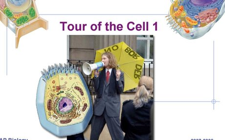 Self Guided Tour of Organelles. pdf
