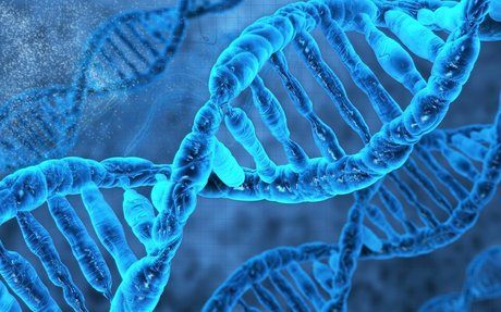 Orthopedic Regenerative Stem Cell Therapy Journal